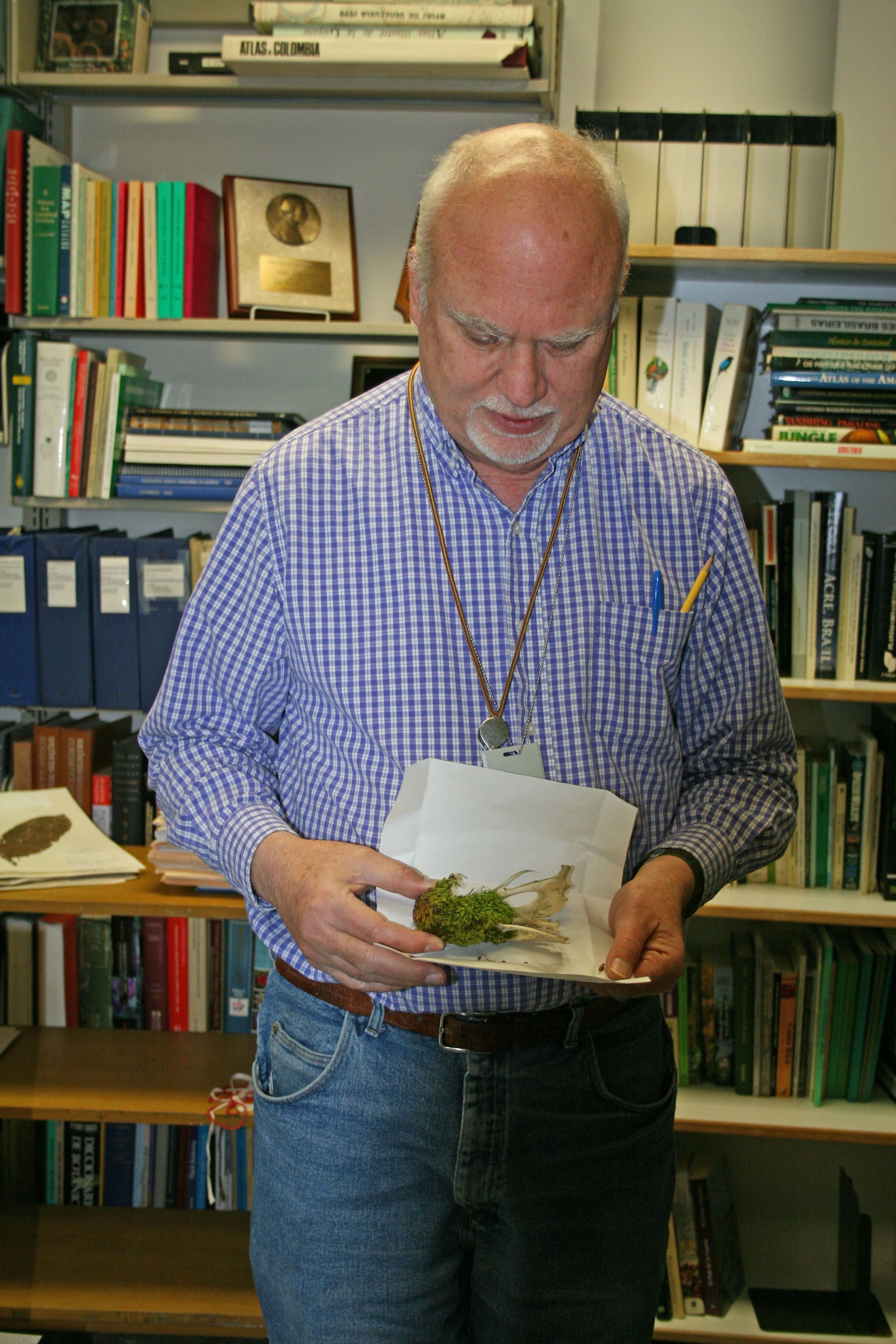 Bill Buck showing a moss growing on the bones of an animal. Photo by S. A. Mori.