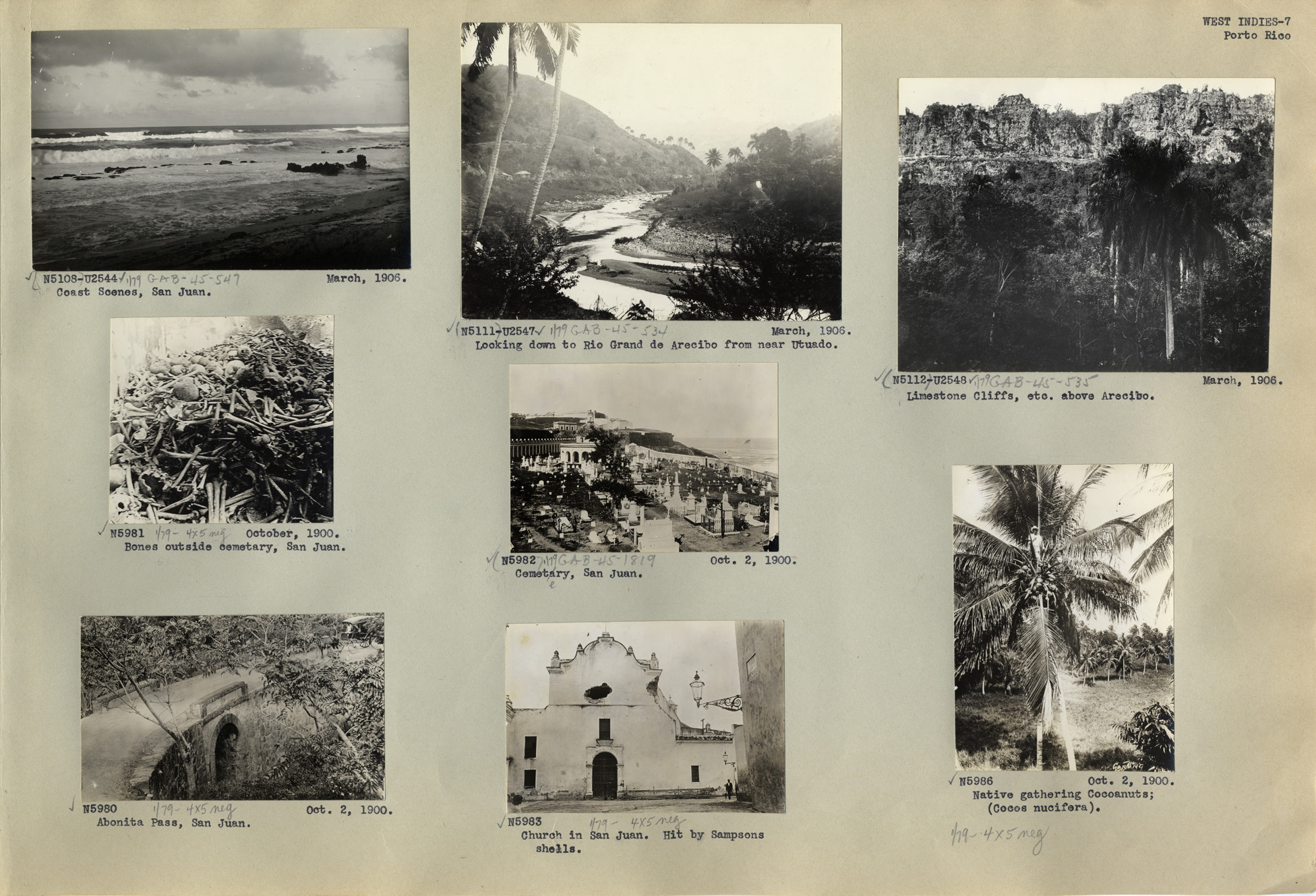 West Indies Photograph Album page by N. L. Britton and E. G. Britton.